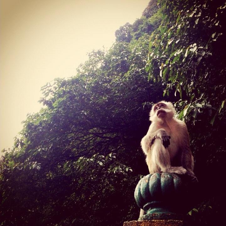 Monkey king at the Batu Caves in Kuala Lumpur, Malaysia