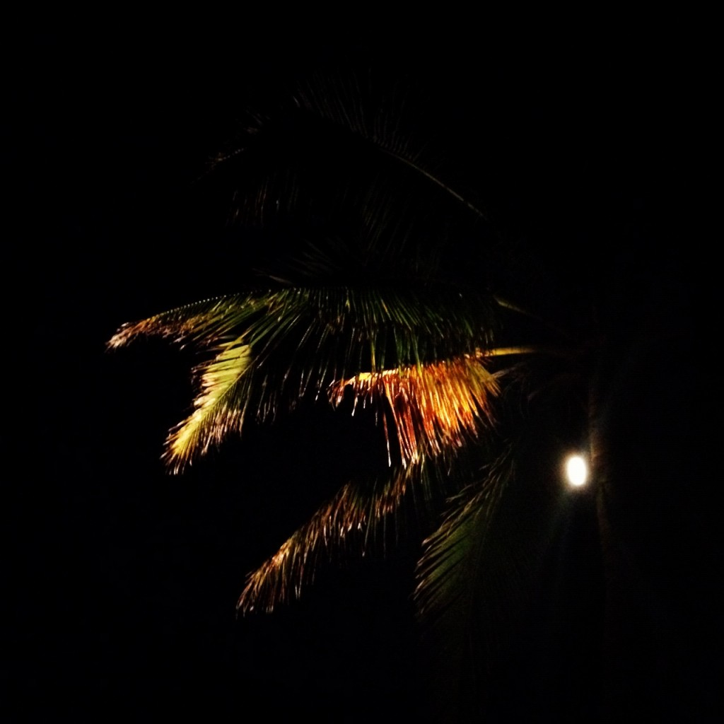 Nighttime view of a palm tree