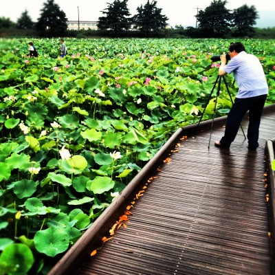 The Lotus Pond in Gyeongju