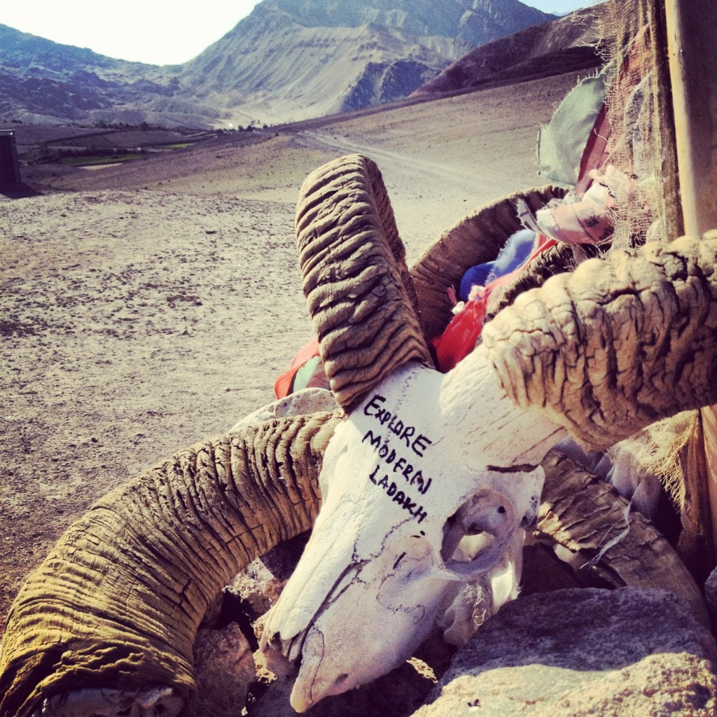 Finding the skull of a yak