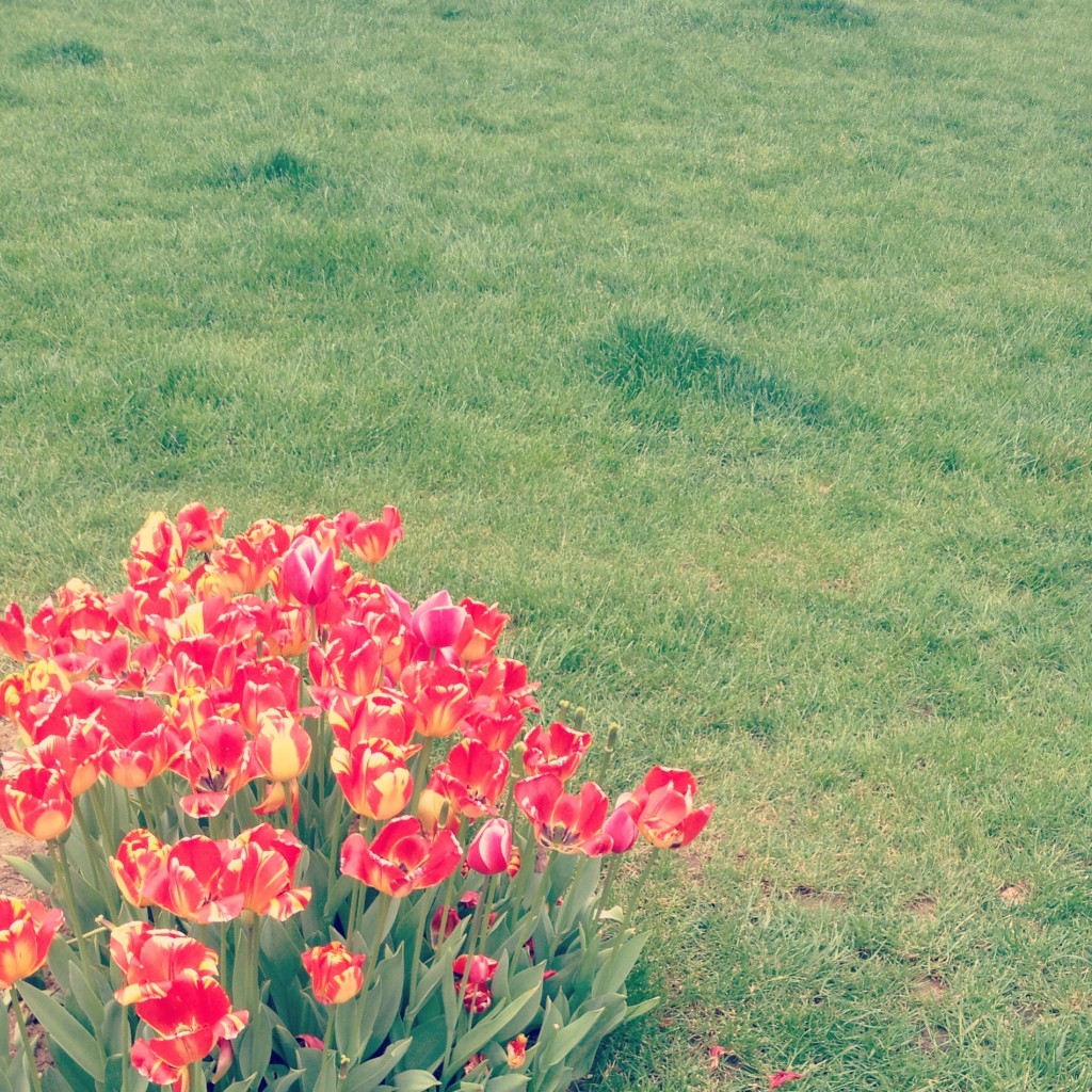 April is tulip month in Turkey